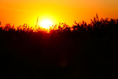 Solnedgång i Kagalnik Arkivfoton