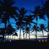 Solnedgång i kokospalmerna royaltyfri bild