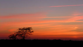 Solnedgång i landet med en trädkontur Royaltyfri Foto