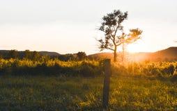 Solnedgång i landssidan Arkivbild