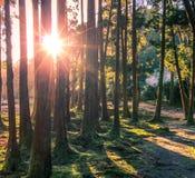 Solnedgång i mitt av skogträd royaltyfria foton