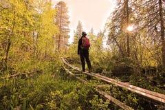 Solnedgång i nationalpark Royaltyfri Foto