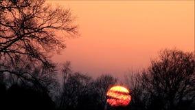 Solnedgång i naturen lager videofilmer