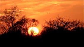 Solnedgång i naturen arkivfilmer