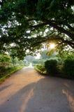 Solnedgång i park Arkivbild