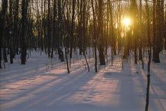 Solnedgång i parkera i vinter Royaltyfri Fotografi