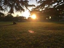 Solnedgång i parkera i Leamington Spa, UK royaltyfri fotografi