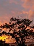 Solnedgång i Porto Alegre, Brasilien royaltyfria bilder