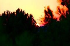 Solnedgång i Portugal Arkivfoto