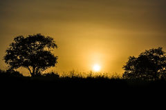 Solnedgång i ranthambhorenationalpark Arkivfoton
