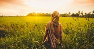 Solnedgång i risfältfält Arkivbild