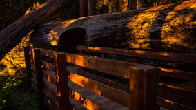 Solnedgång i sequoianationalpark stock video