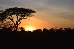 Solnedgång i Serengeti Fotografering för Bildbyråer