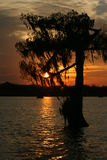 Solnedgång i sjön Martin Louisiana Arkivfoton