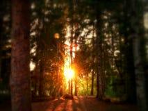 Solnedgång i skog royaltyfri bild