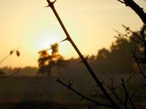 Solnedgång i skog Arkivbild