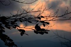 Solnedgång i skog Fotografering för Bildbyråer