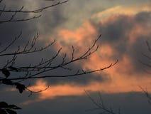Solnedgång i skog Arkivfoto