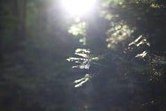 Solnedgång i skogen Arkivfoto