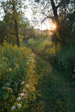 Solnedgång i skogen Royaltyfri Foto