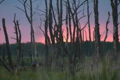 Solnedgång i skogen Arkivbild