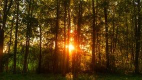 Solnedgång i skogen royaltyfri bild