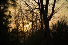 Solnedgång i skogen Arkivbilder