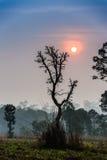 Solnedgång i skogen Fotografering för Bildbyråer