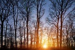 Solnedgång i skogen Royaltyfria Bilder