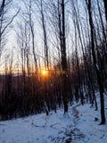 Solnedgång i skogen i Carpathians, Slovakien Royaltyfria Bilder