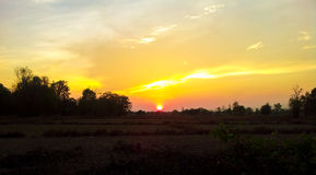 Solnedgång i skogkant Arkivbild