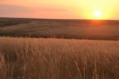 Solnedgång i stäppen Arkivfoton