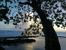 Solnedgång i Stilla havet Royaltyfri Bild
