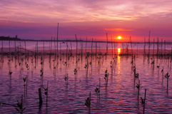 Solnedgång i Tam Giang Lagoon - ton Arkivbild