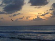 Solnedgång i Tobago Arkivbild