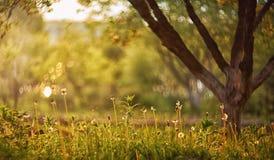Solnedgång i trädgården och lyxbokehen Arkivbilder
