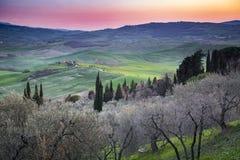 Solnedgång i Tuscany med oliv- och cypressträd Royaltyfri Bild
