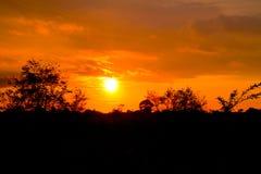 Solnedgång i vändkretsarna med trees royaltyfri bild