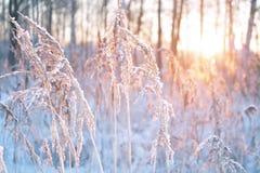 Solnedgång i vinter royaltyfria bilder