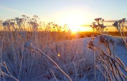 Solnedgång i vintern Sverige Arkivfoto
