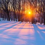 Solnedgång i vinterskog Arkivbild