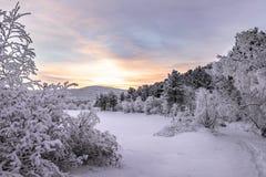 Solnedgång i vinterskogen arkivbilder