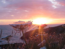 Solnedgång i Wales Royaltyfri Bild