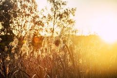 Solnedgång i Warriewood våtmarker Arkivbild