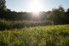 Solnedgång i wildnes Royaltyfri Fotografi