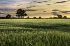 Solnedgång - jordbruksmark - jordbruk arkivfoto