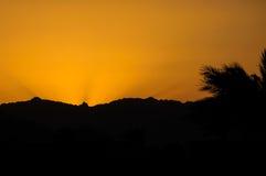 Solnedgång med berg och palmblad i öken Arkivfoto