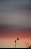 Solnedgång med blomman Arkivfoton