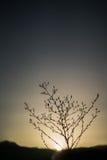 Solnedgång med blommor Arkivfoto