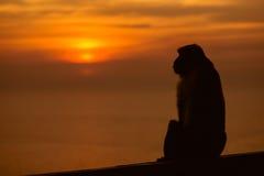 Solnedgång med den ensamma apan Arkivbild